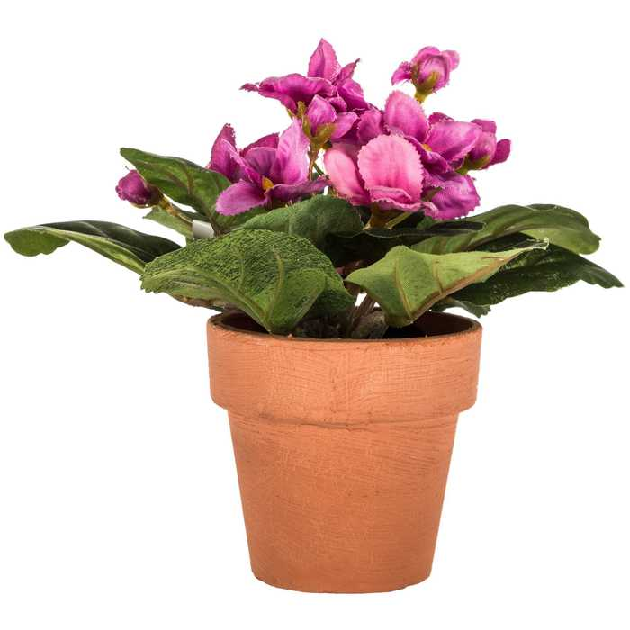 Mini Light Orchid African Violet In Pot Hobby Lobby 1082395